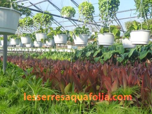 plantes milieux humides