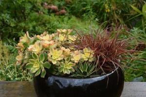 Jardins miniatures