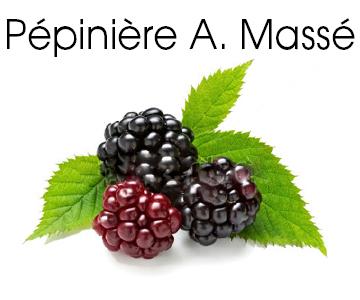 Producteur de plantes fruitières