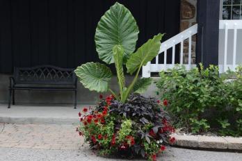 Mix des plantes