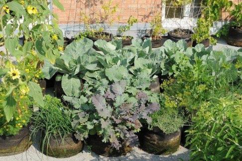 Mix de plante