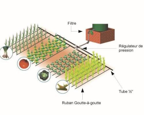 paillis irrigation