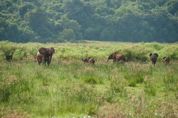 Regina Photographer - In Uganda - Paraa Lodge - Elephants