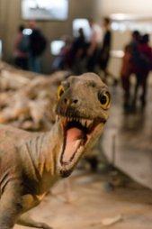 Surprised Tyrannosaurus Rex baby