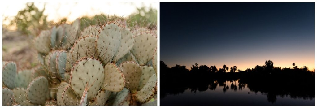 Regina Wedding Photographers - Showit United 2018 - Tempe - Phoenix - Arizona - Cactus - Desert Sunset