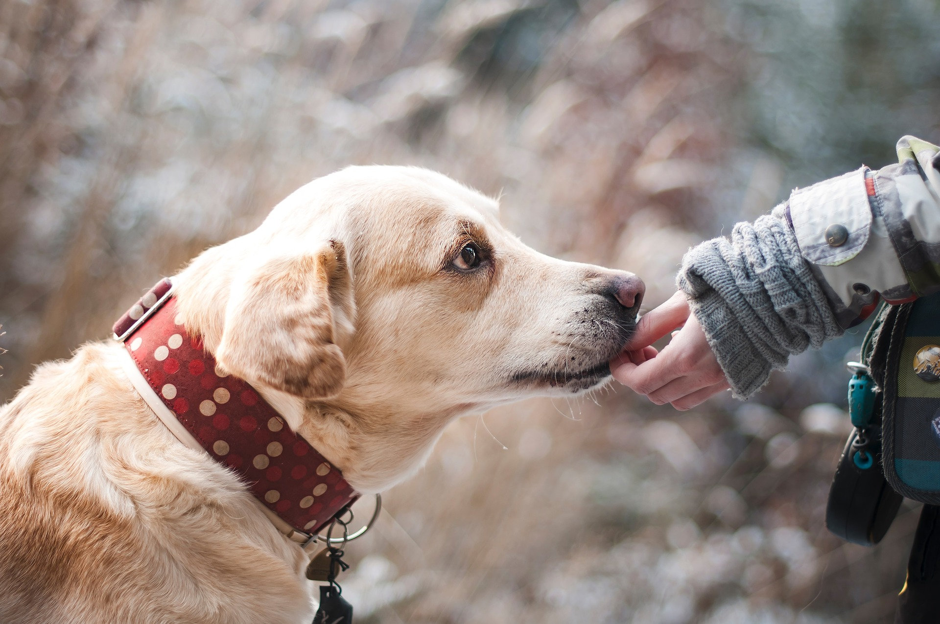 Pets Help People Maintain Independence
