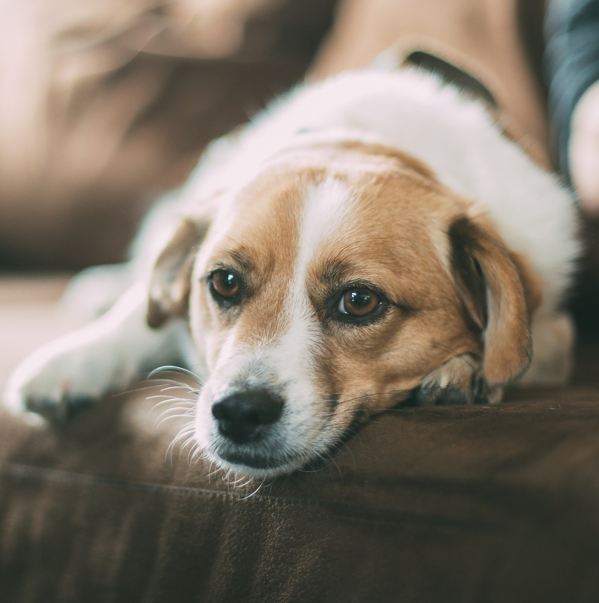 Dogs Can Help Manage Seizures