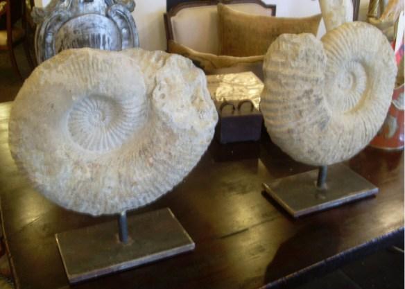 pair of ammonites