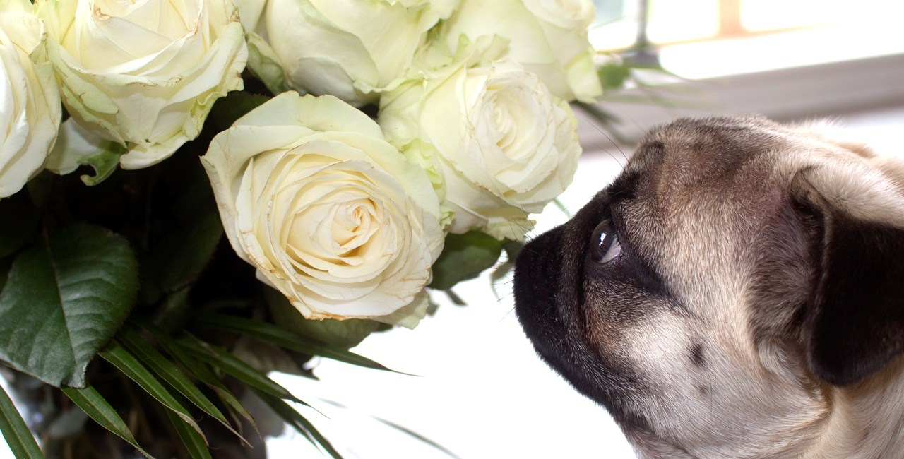 Flowers By Delivery: OK Bouquet Review