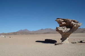 Rock tree. Southern Bolivia.