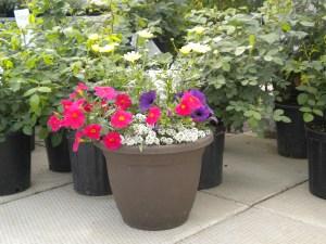 Greenhouse_2016 Planters2