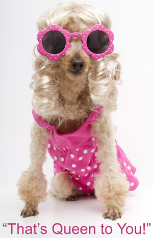 """Photo, of a dog wearing a pink dress and pink sunglasses with the caption """"That's Queen to You,"""" illustrating an article, by Richard A. Klass, entitled Statute of Limitations Dooms Sister-in-Law's 33 Year Old Mortgage"""
