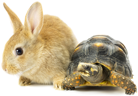 Rabbit with yellow fur standing next to gray and yellow turtle illustrating article by Richard Klass about nonresident plaintiffs posting Security for Costs.