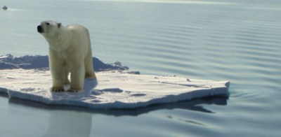 The Leap from Polar Bears to Plastic