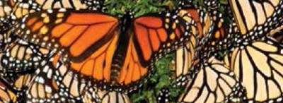 Butterflies and Mudslides