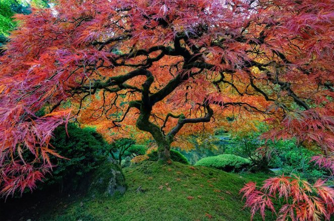 Covenant-blog-amazing-trees-21