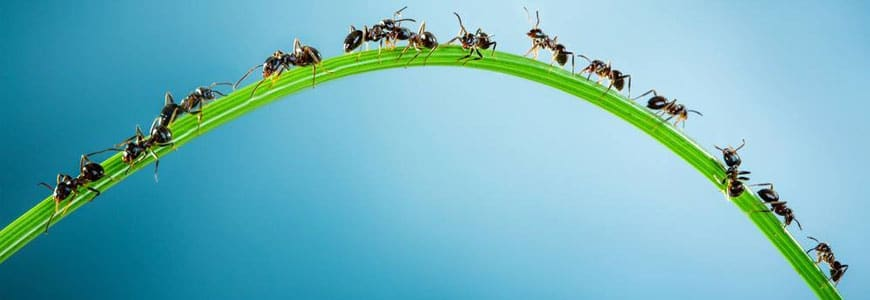 Bug Fact: Ants are as old as Dinosaurs