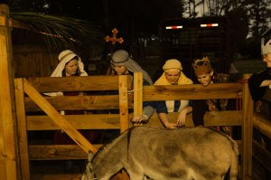 Live Nativity - The Donkey
