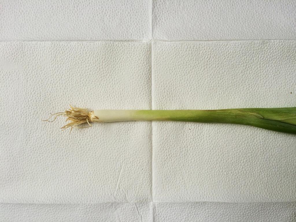 onion-covercooking-food-blog