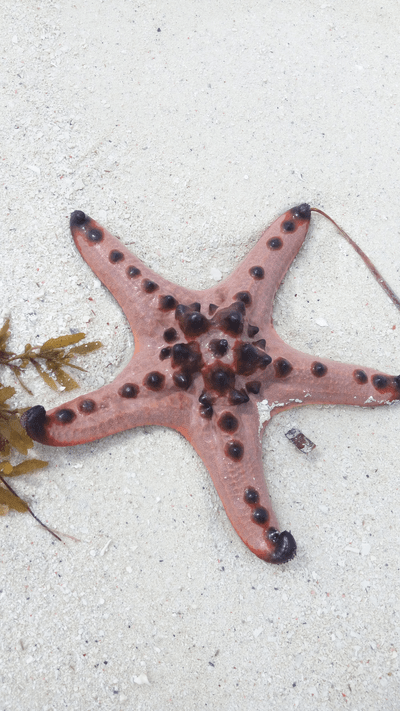 One of the starfishes