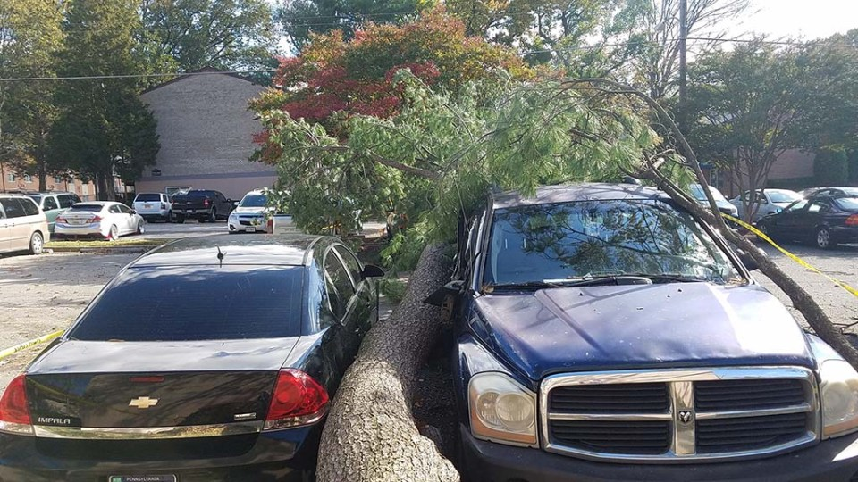 Tree laying between two cars