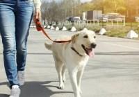 Dog Caretaker Cover Letter Page Image