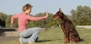 Dog Trainer Cover Letter Sample | CLR