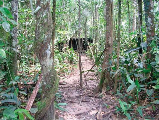 View through the jungle to a FARC base camp area. The camouflage and locations of most base camps require soldiers on the ground and extensive intelligence gathering to find them. PSYOP product–induced FARC surrenders provided guides to the hidden camp locations.