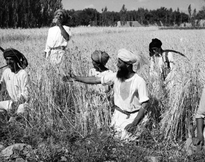 Un grupo de mujeres que trabajan en un campo Descripción generada automáticamente con poca confianza
