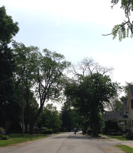This is the view down my street.