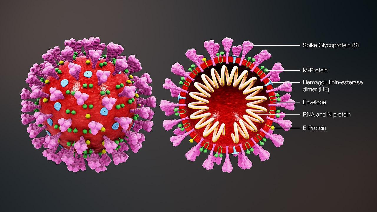 怕新冠病毒?科学家教你防毒22招!