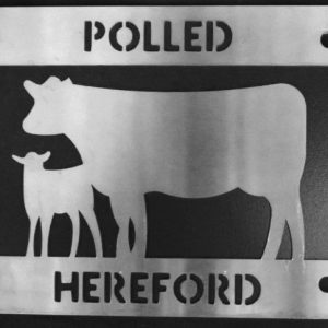 Polled Hereford Cow/Calf