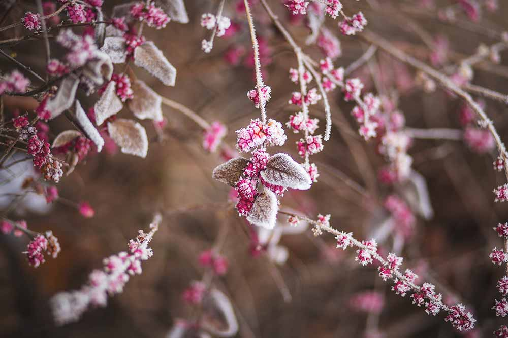 winter gardening tips frozen leaves kent