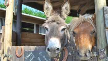 Cowgirl - Barnyard