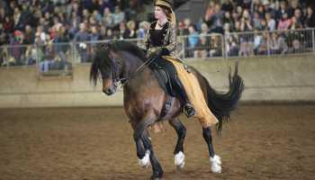 northwest horse expo