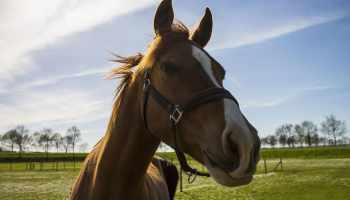 """Cowgirl Magazine"" - Horse Lice"