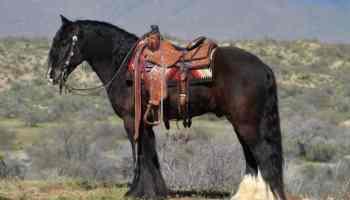 GF TWO SOCKS (Deputy) horse