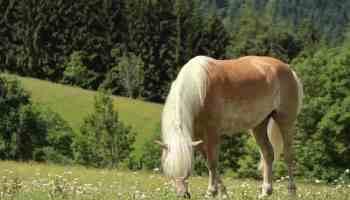 horse grazing in grass cowgirl magazine