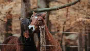 Pumpkin Horse Treats cowgirl magazine