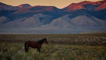 horse destination cowgirl magazine