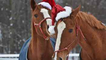 christmas horse treats