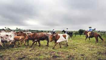 horse working cattle cowgirl magazine