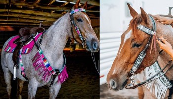 tacktical horse gear cowgirl magazine