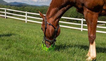 grazing muzzle cowgirl magazine