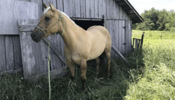 barn-day-essentials-cowgirl-magazine