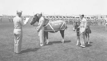 war-horses-cowgirl-magazine