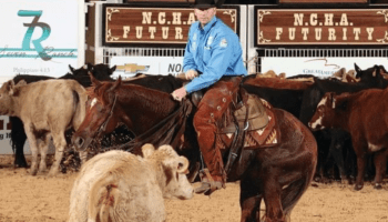 working-cows-cowgirl-magazine