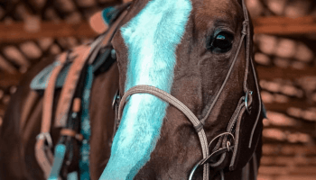 cowgirl-magazine-horse-sitter-tips
