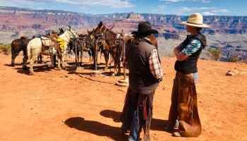 mules cowgirl magazine