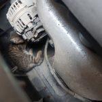 Głośne miauczenie wydobywało się spod maski samochodu. Na ratunek ruszyli strażnicy miejscy